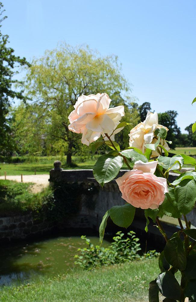 王妃の村里に咲くバラ。