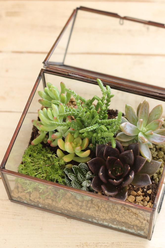 こんなガラスの中にも植え込み可能