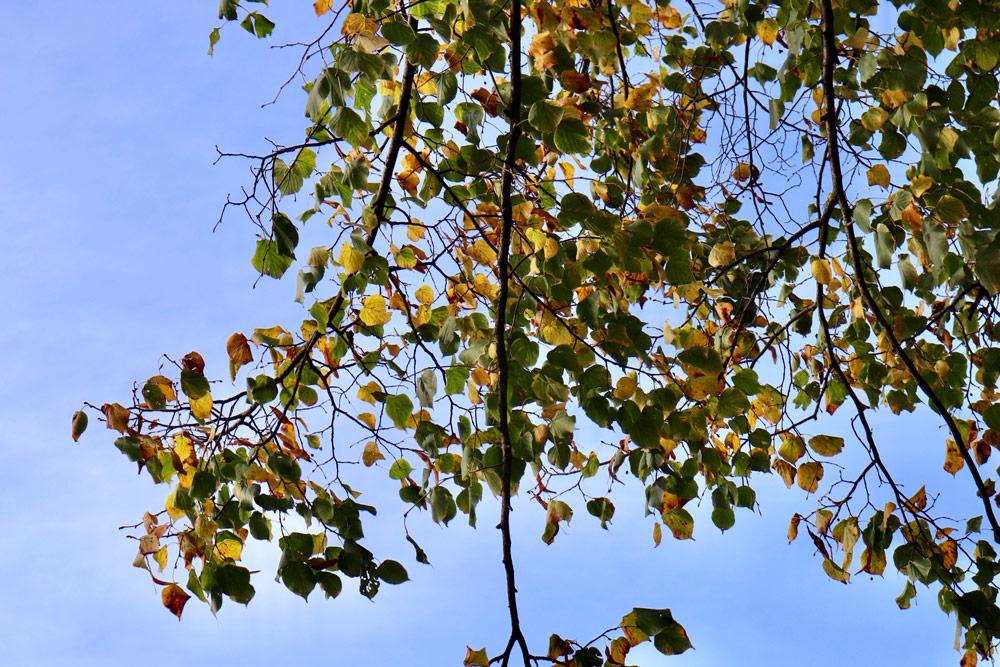 見上げると風にそよいでカサカサと音を立てて揺れる葉たち