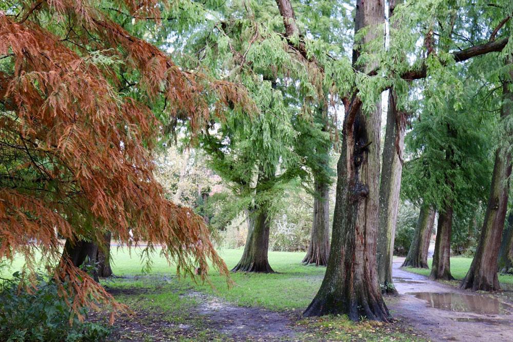 針葉樹エリアの木々