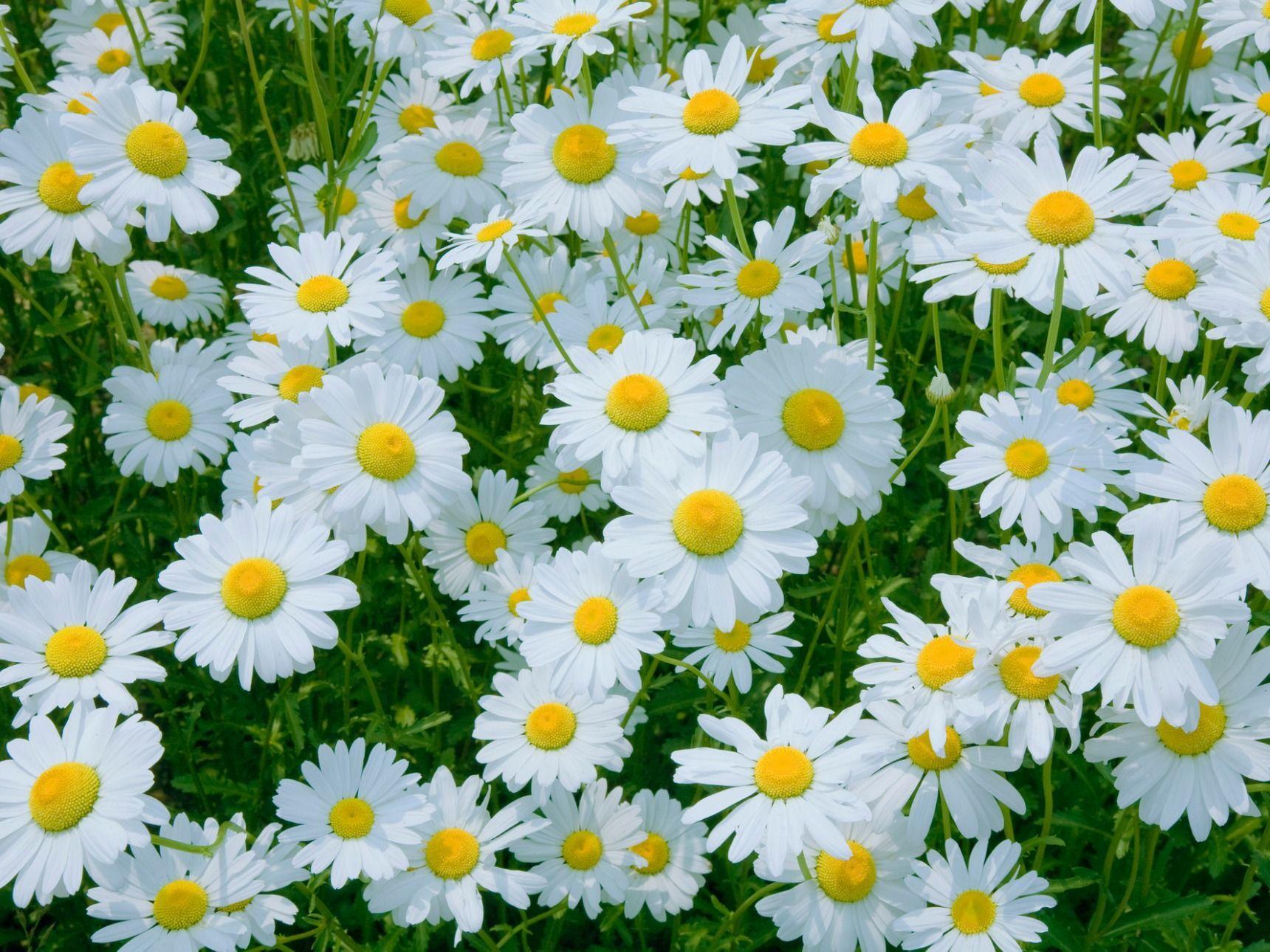 ギリシア 語 で 真珠 という 意味 の 花 は