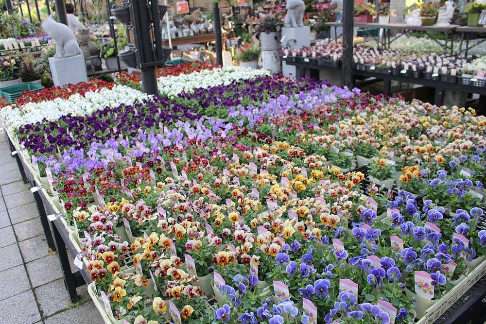 ガーデンガーデンの花苗