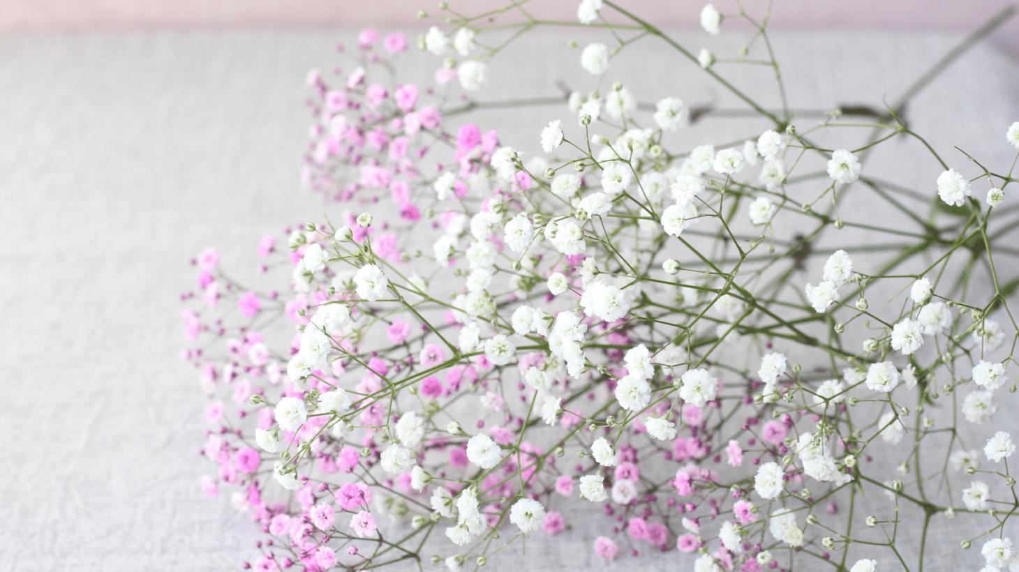 花 しょう ま を 名 も に は ない 名前 付け 名のない花には名前を付けましょう。【2】