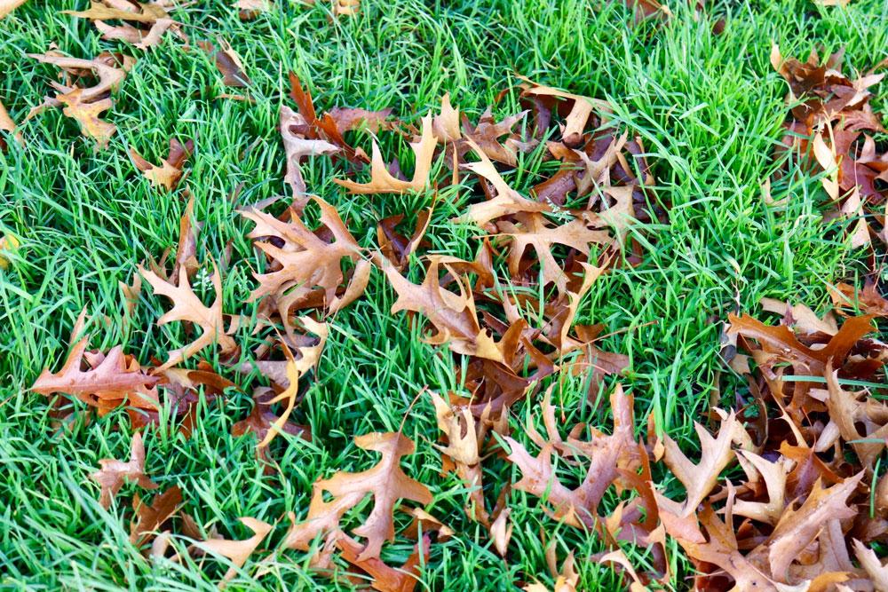 ふかふかの芝生の上に枯葉が落ち踏むとサクサクする