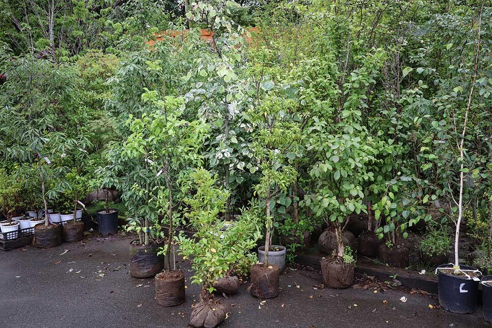 ガーデンガーデンの樹木売り場