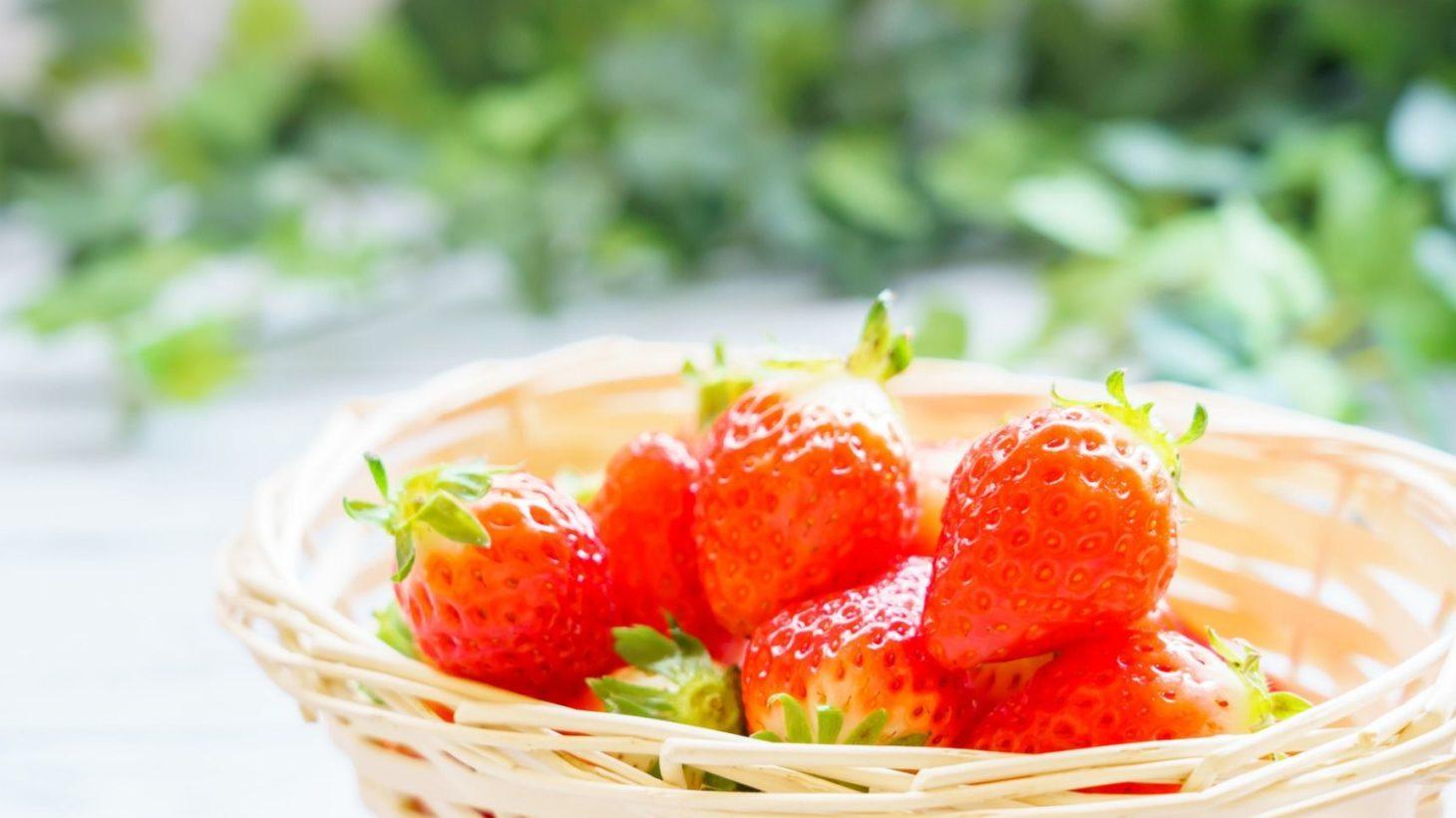 イチゴ の 苗 の 取り 方