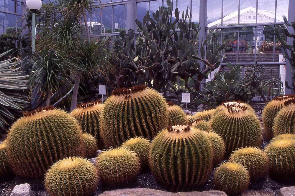 広島市植物公園 サボテン