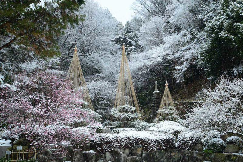 広島市植物公園 雪吊り