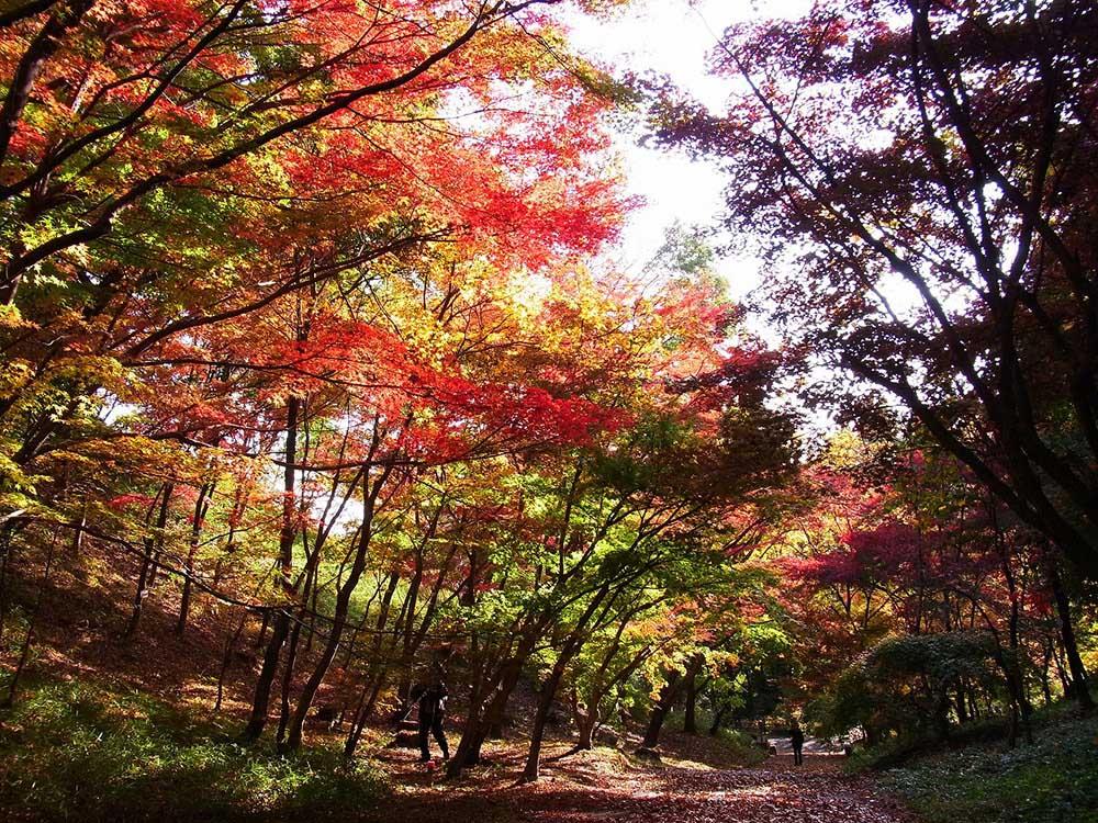 広島市植物公園 紅葉