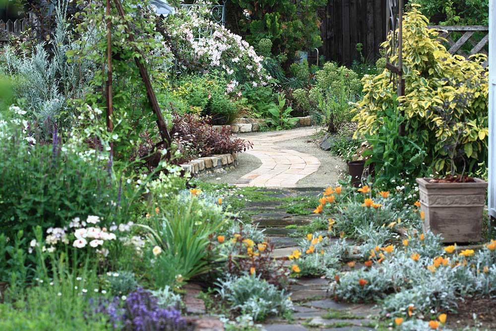 藤井邸の庭