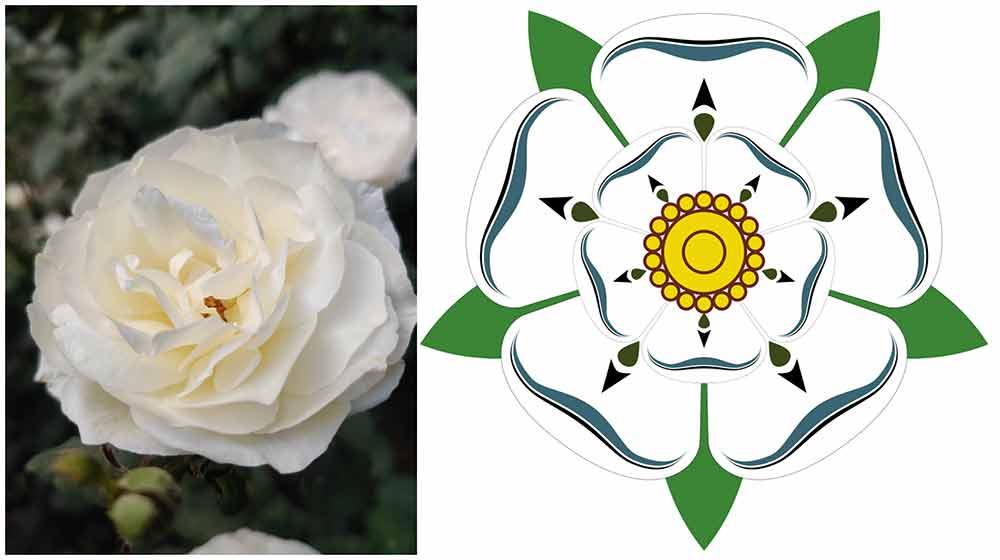 ヨーク家の白いバラ