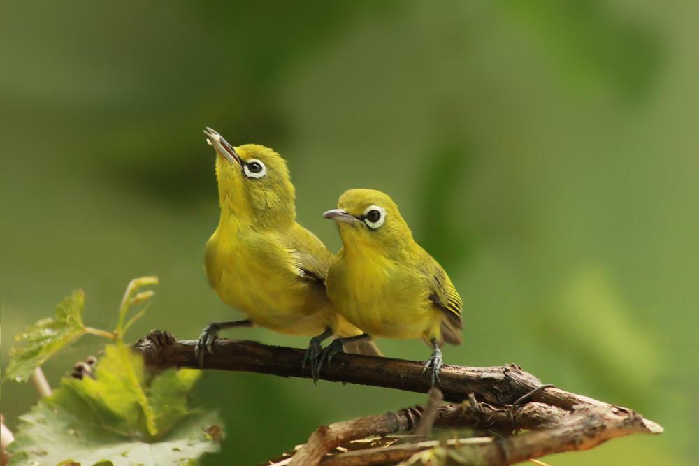 鳥を呼ぶ庭で至福のひとときを…DIYでつくる巣箱などのガーデンアイデア