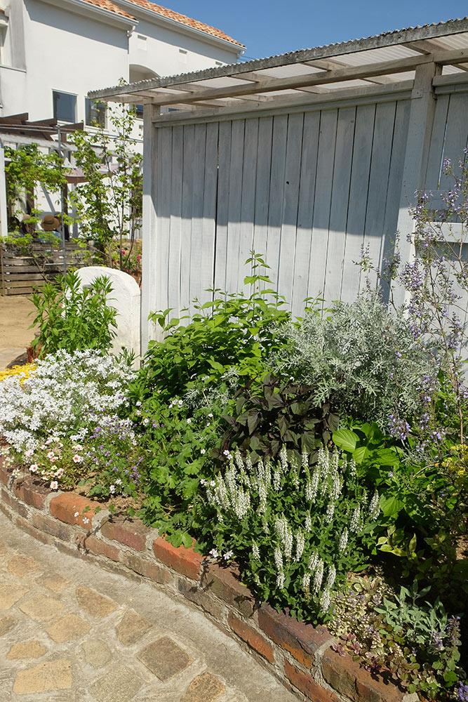 藤井邸の植栽
