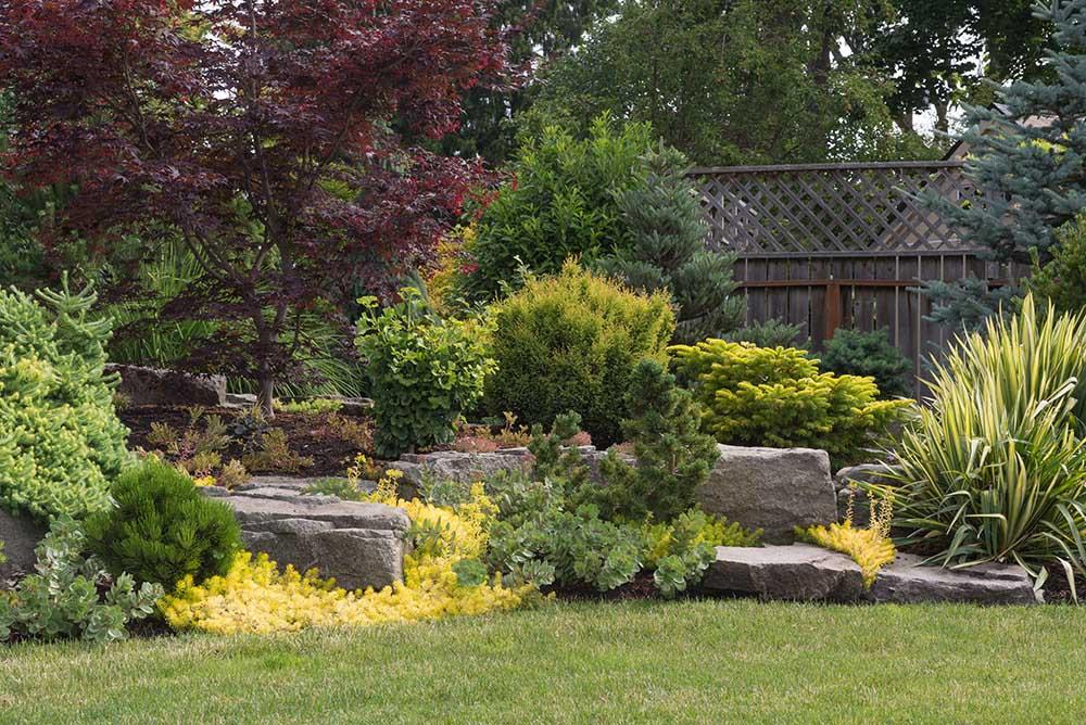 常緑樹の庭