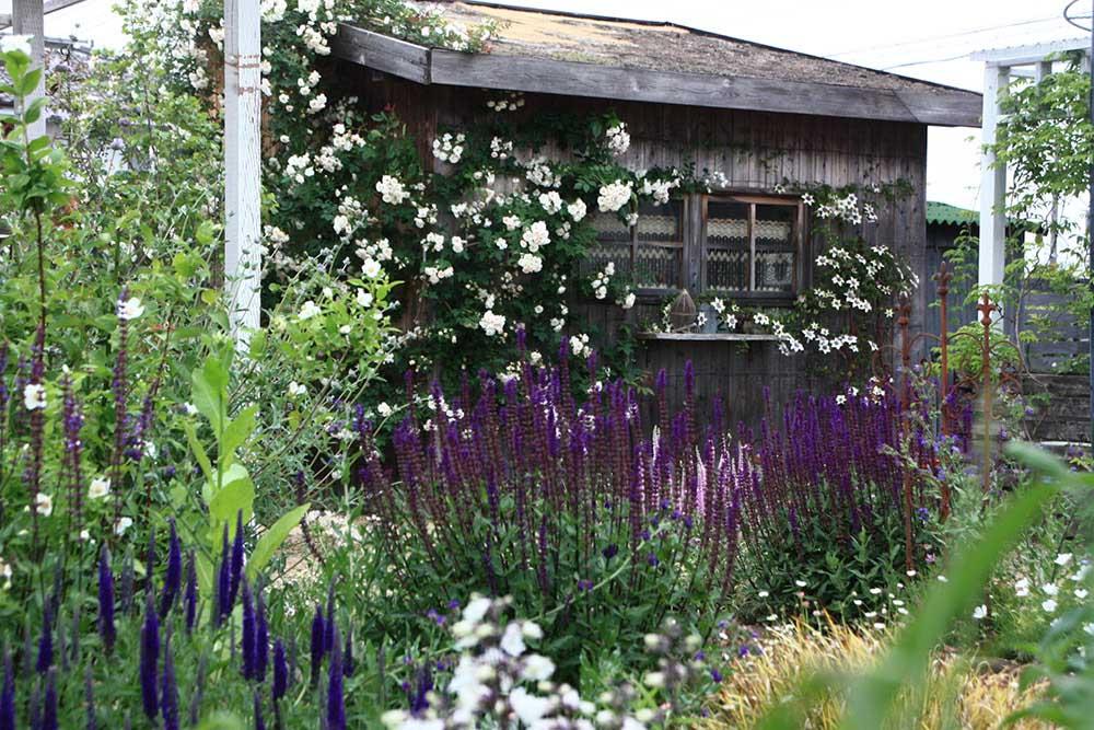 バラの絡む小屋
