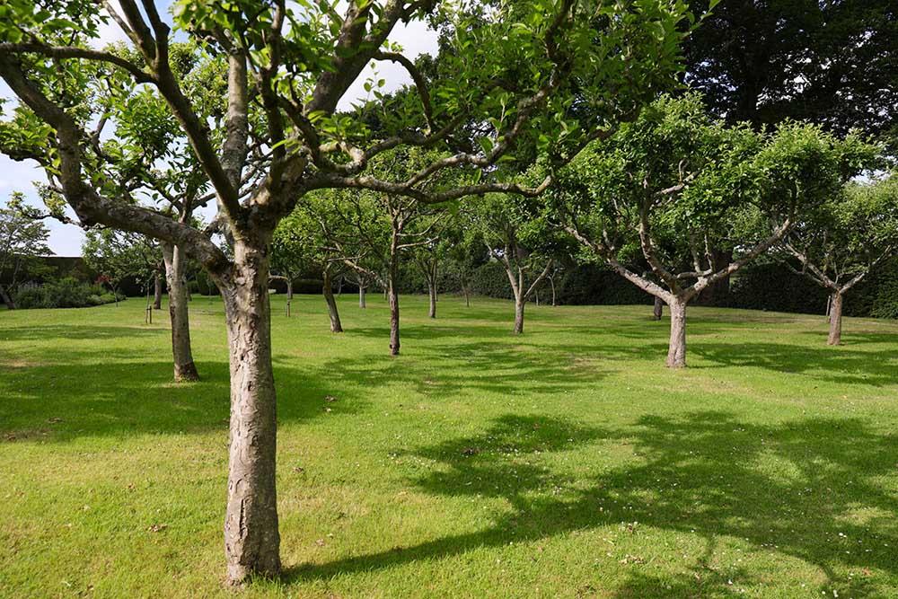 タウン・プレイスの果樹園