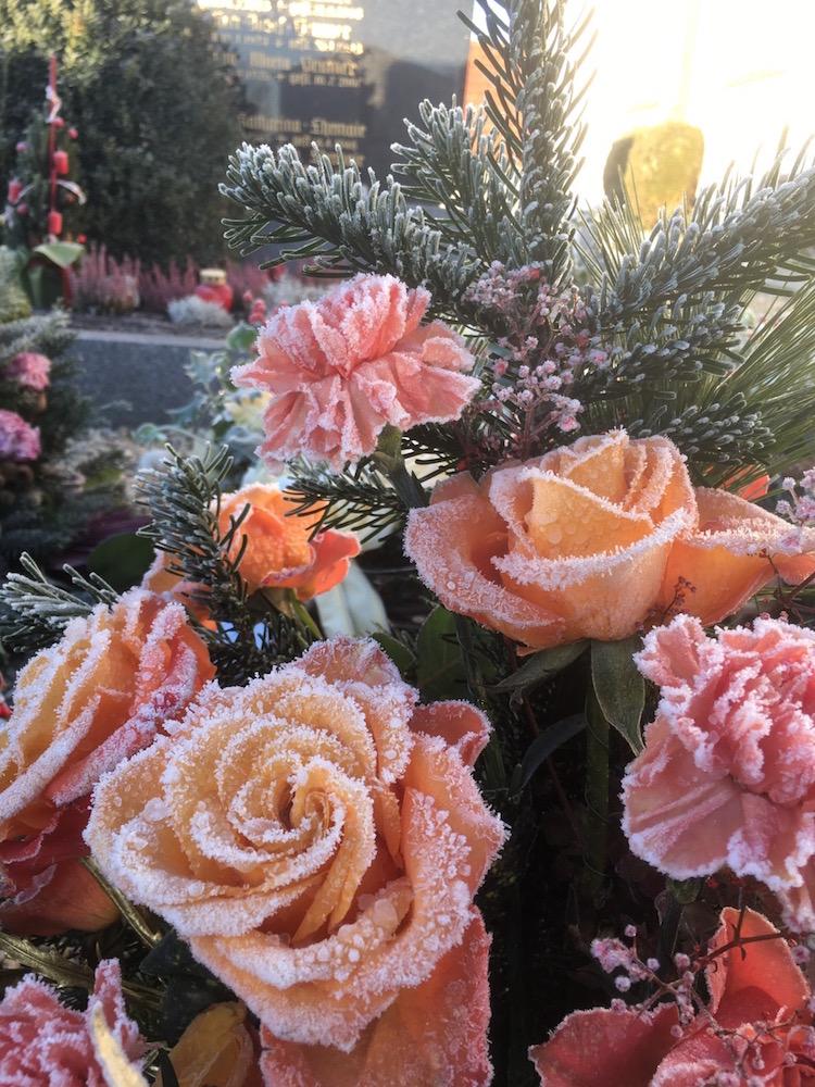 墓地のバラ