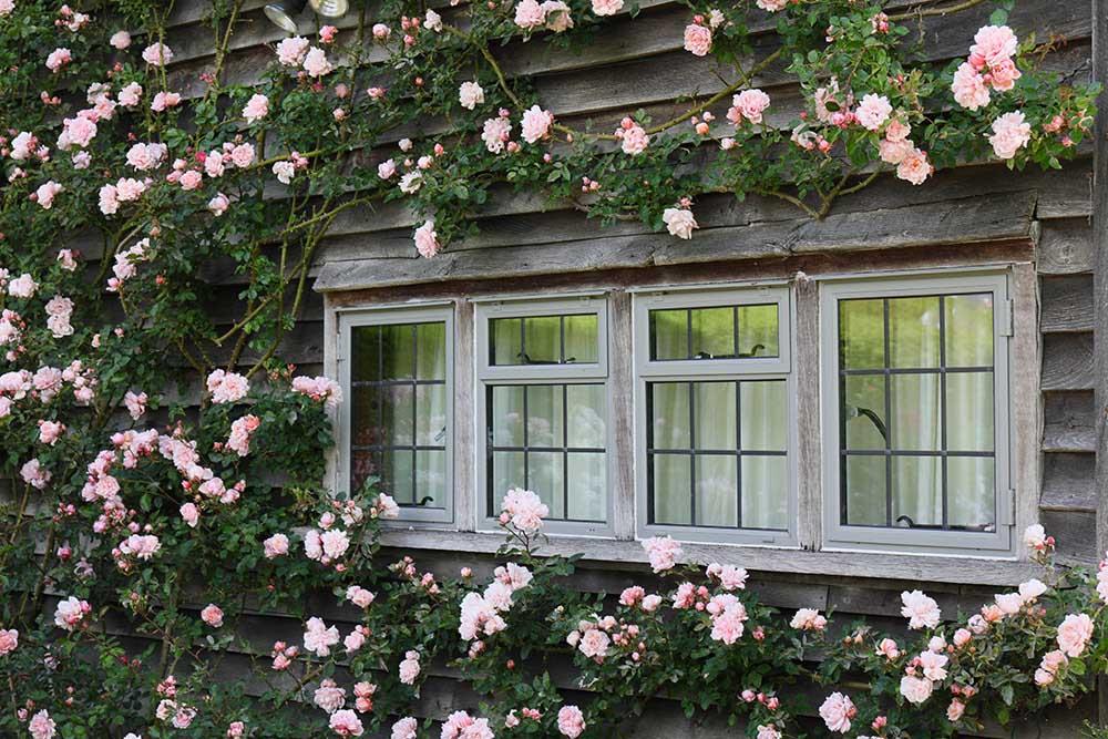 タウン・プレイスの窓辺のバラ