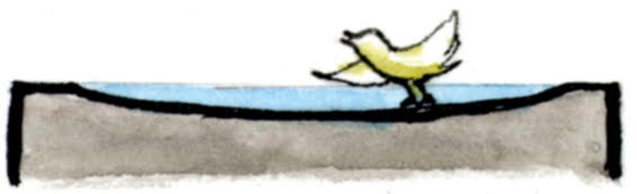 浅いくぼみで小鳥がおぼれないバードバス