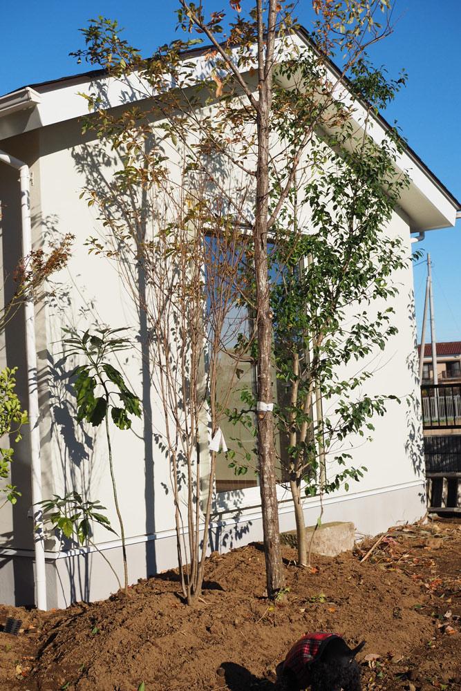 外からも植物で壁を覆うように