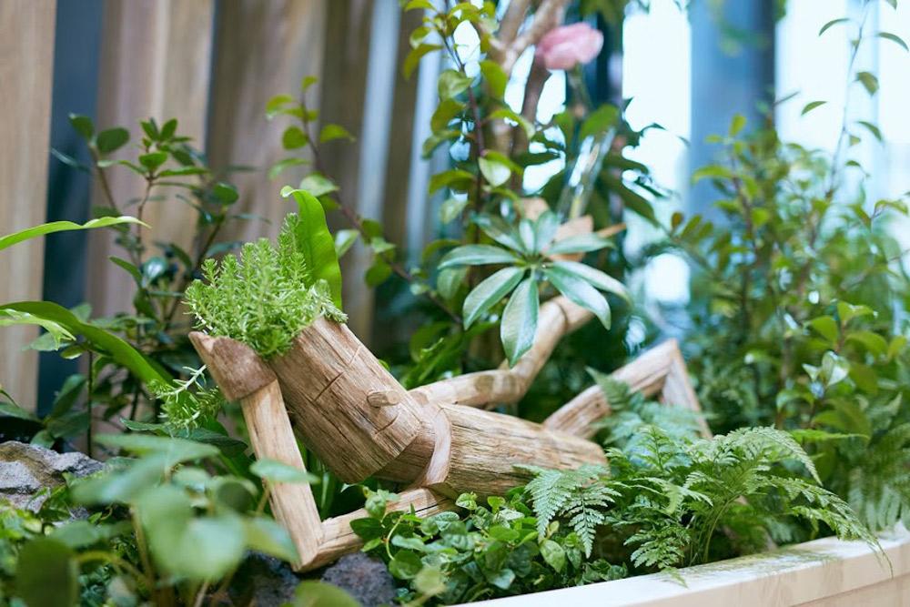 観葉植物だけでなく、ここ青山の在来種の苗木を植える