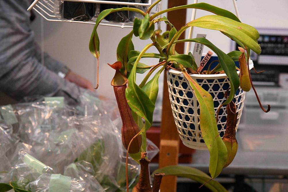 BORDER BREAK!! 食虫植物