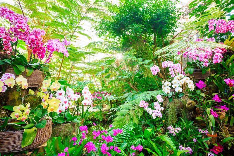 国営沖縄記念公園(海洋博公園)・熱帯ドリームセンター