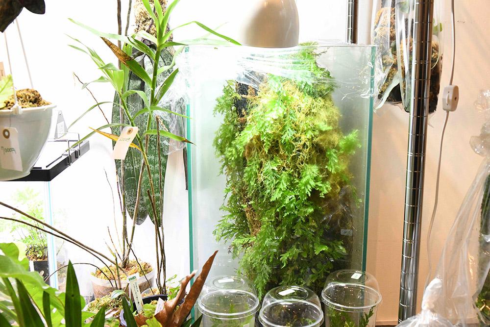 BORDER BREAK!! 雨林植物