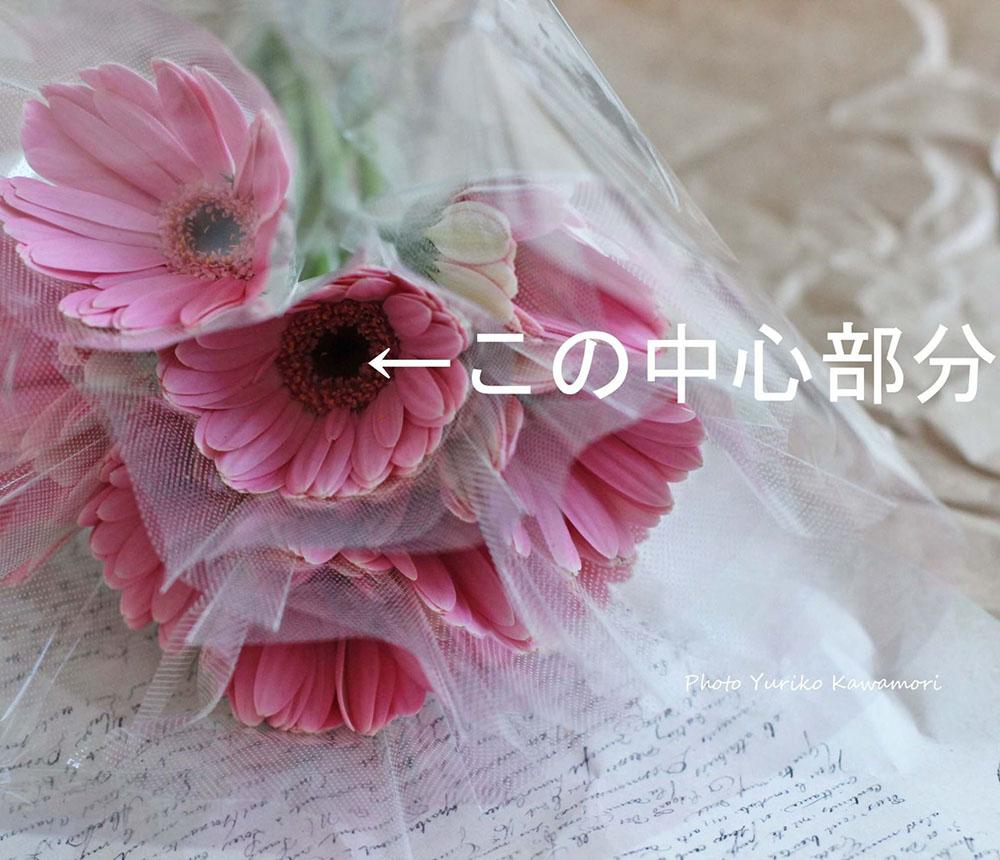 ガーベラの切り花