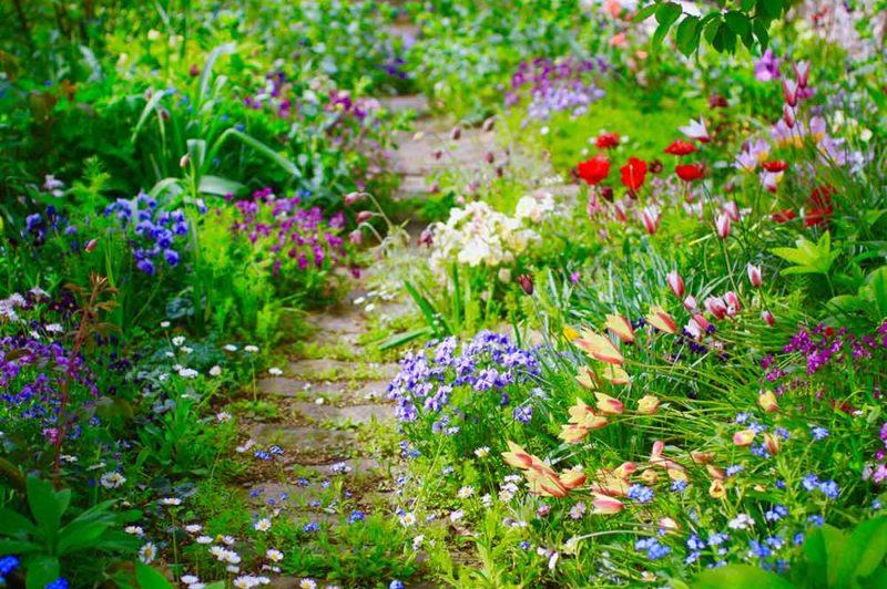春のおすすめ花