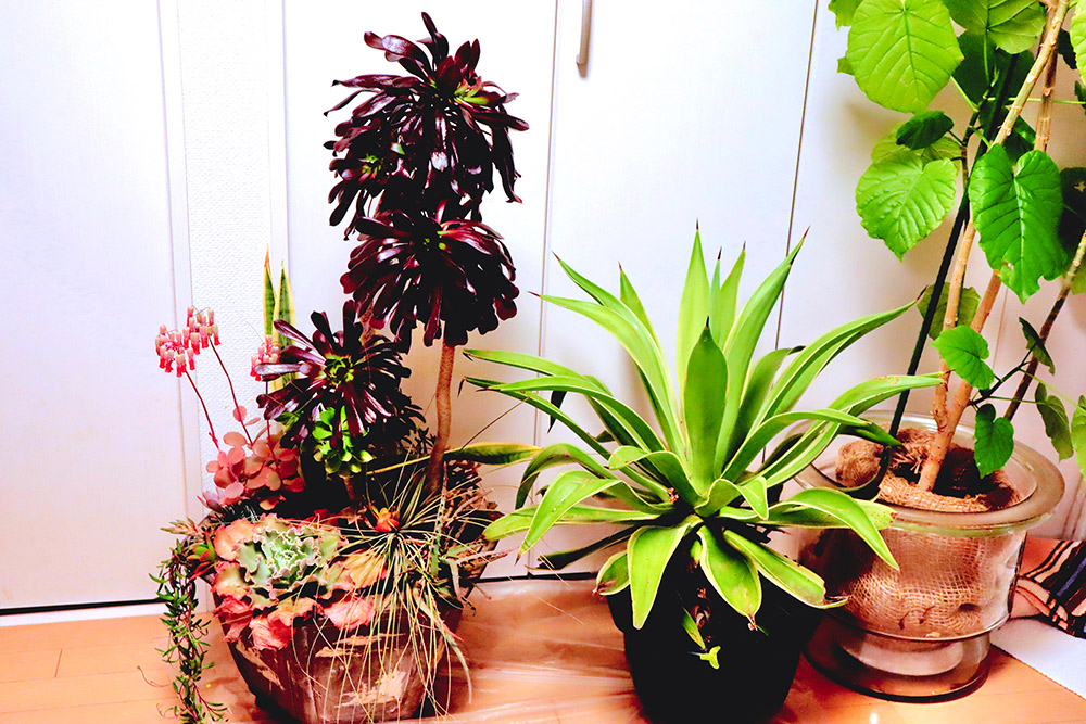 植物の冬越し