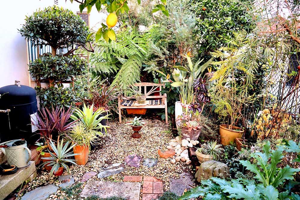 掃除後の庭