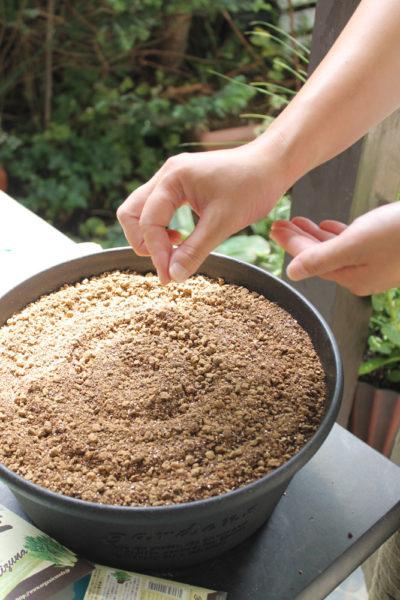 プランターやポット・平鉢などに、種をバラまきします