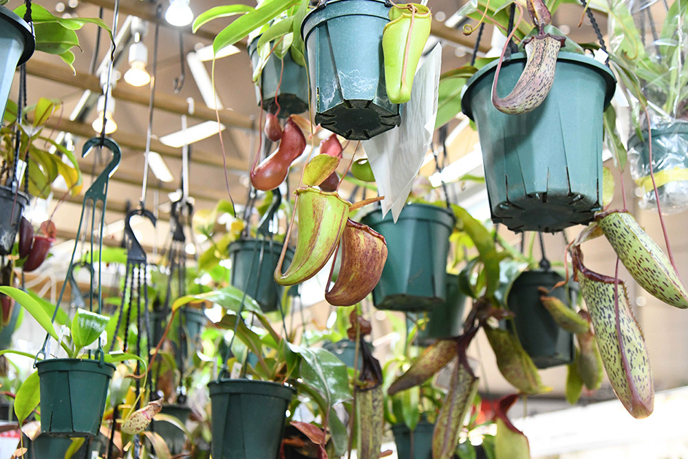 食虫植物ブース