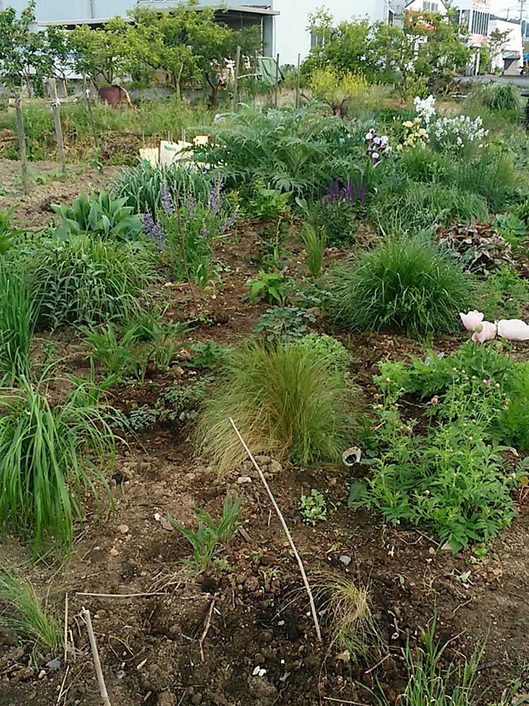 ガーデンの芽吹き