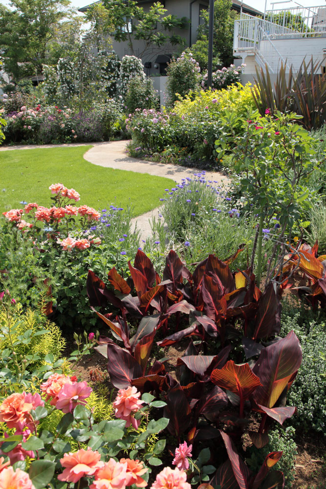 銅葉のカンナが庭をキュっと引き締めてるね。