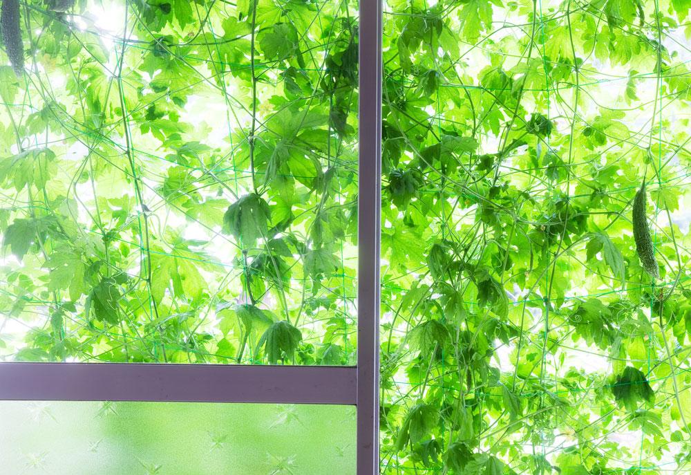 部屋から見たゴーヤのグリーンカーテン
