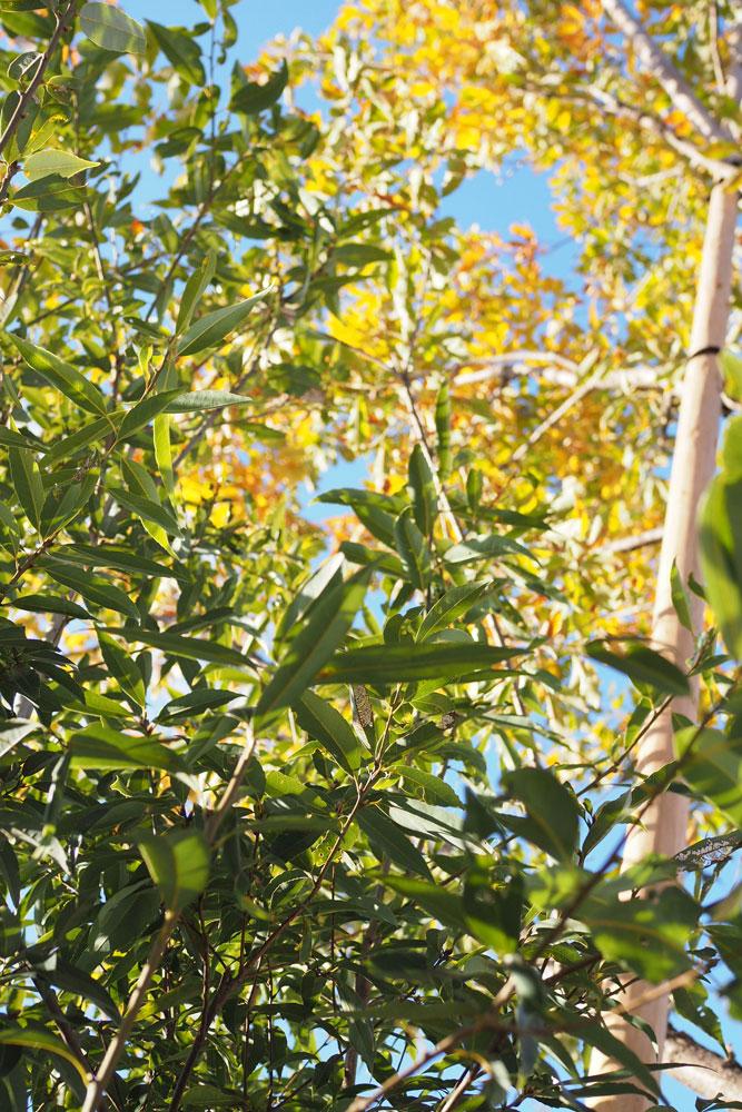 土中環境を作ることが、植物が長く健全に育っていくかぎ