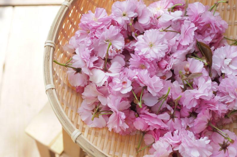 おうち時間に! 「八重桜の塩漬け」を作ってみました