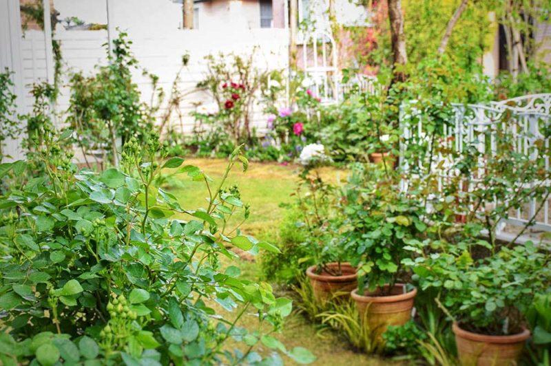バラの庭づくり