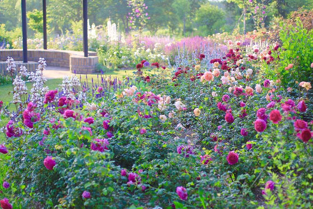 花畑の撮影