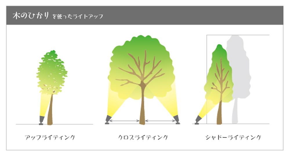 木のひかり