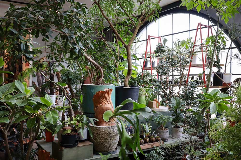 観葉植物専門店「cotoha」