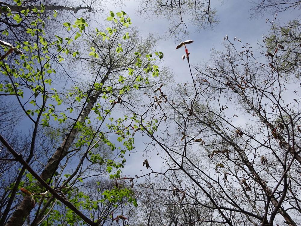 森の階層構想1