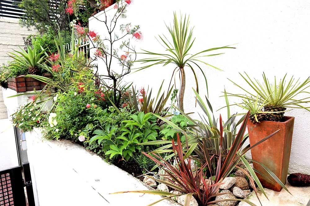 階段の植栽
