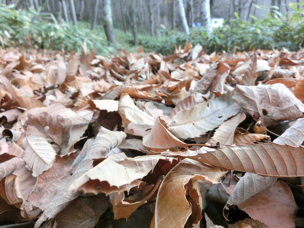 森がもっと面白くなる~土壌 生産機能について~