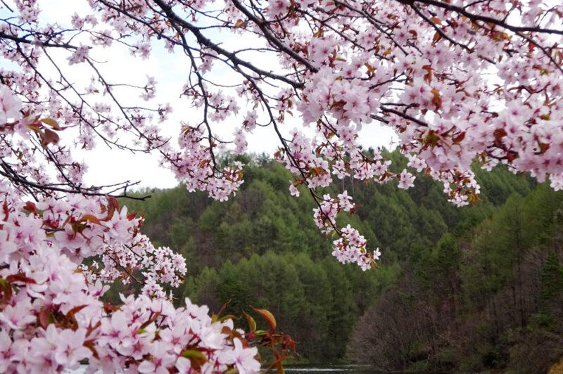 「春の季語」にまつわるお話と「森林インストラクター」〜高原便り 四季折々Vol.3〜