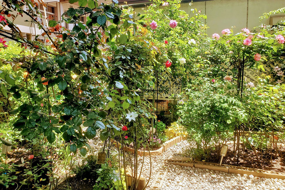 サヘル・ローズさんの庭