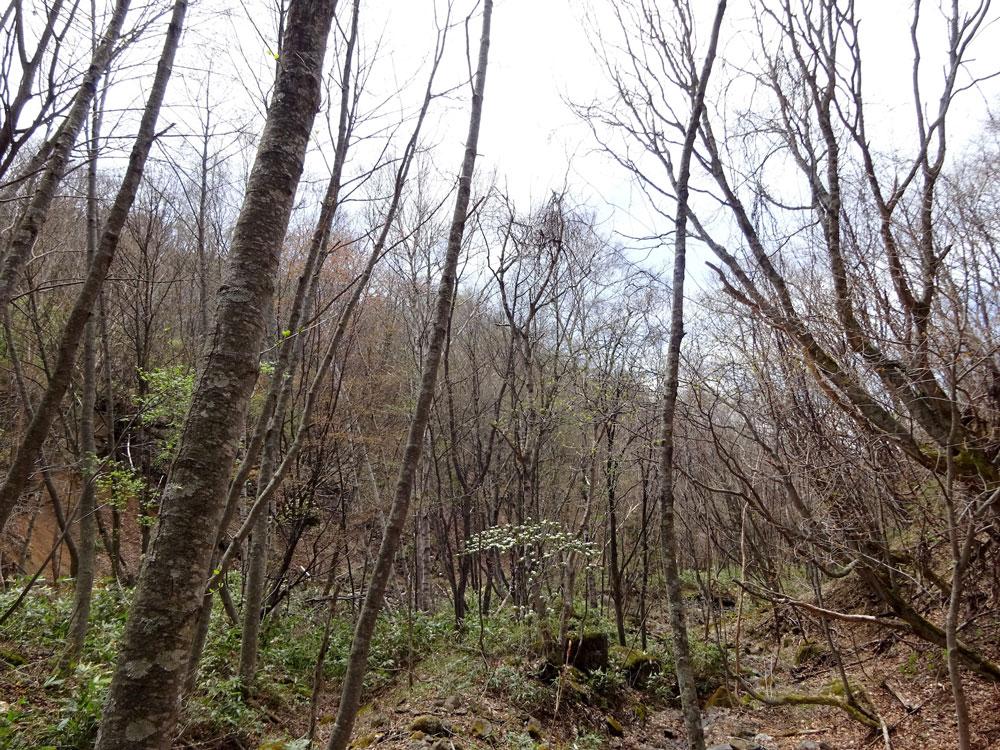 芽吹き始めた森では目立った存在