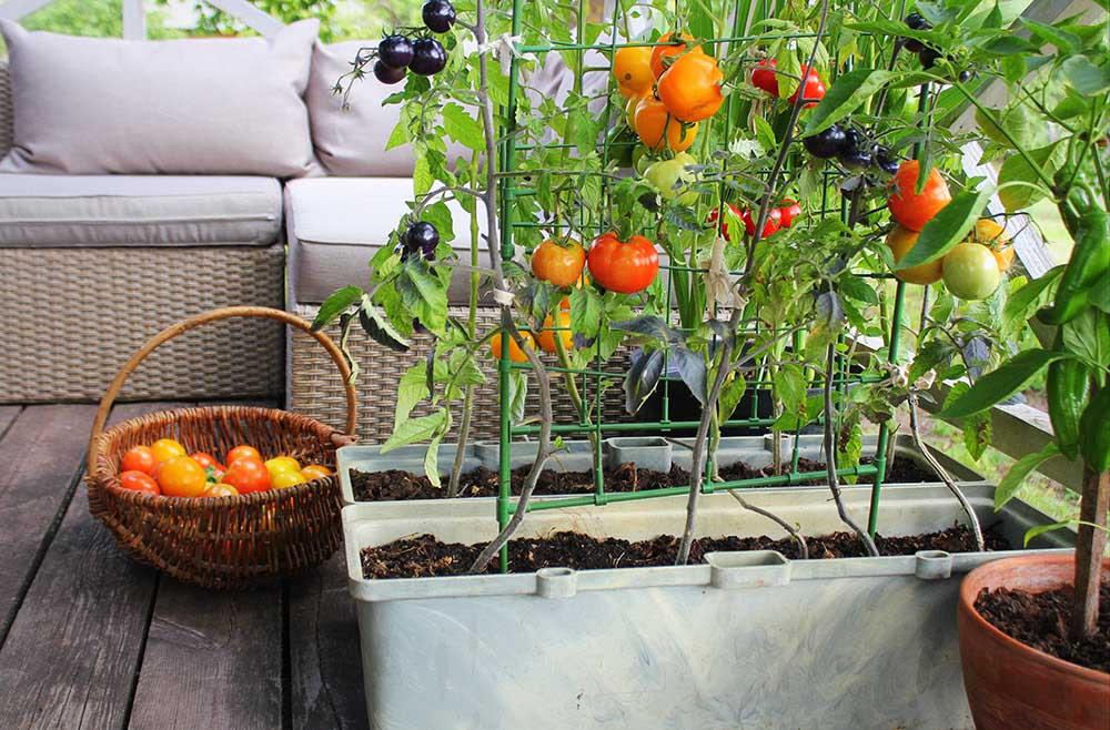 プランターで野菜栽培
